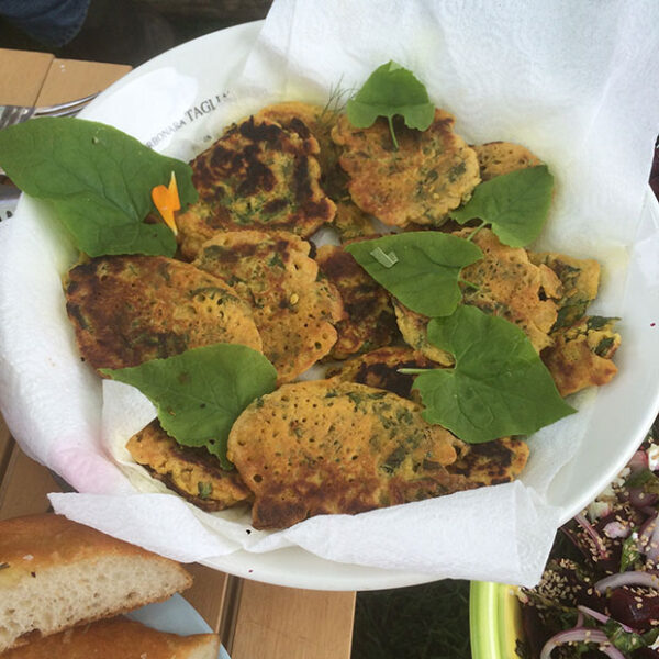 Hablitzia Tamnoides Fritters made from our Hablitzia plants