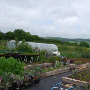Perennial vegetable nursery