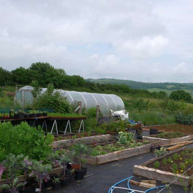Perennial vegetable nursery