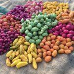 Ten varieties of Ulluco