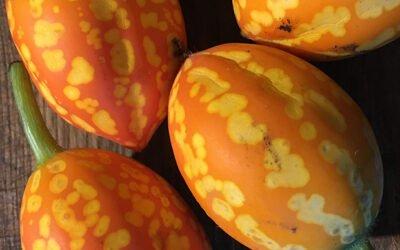 Seed saving and new perennial crops