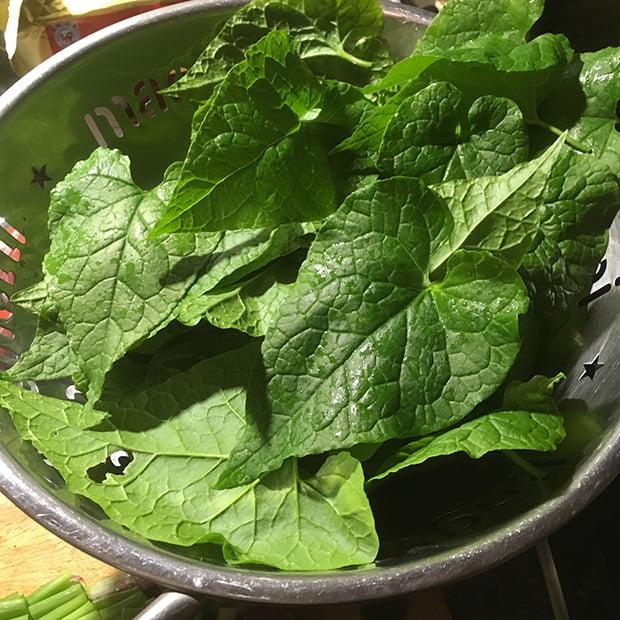 Hablitzia Tamnoides leaves
