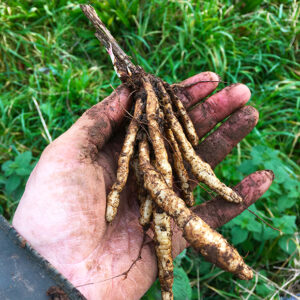 Skirret offset