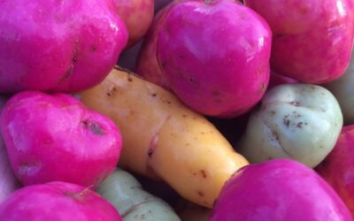 A stunning winter harvest of edible tubers